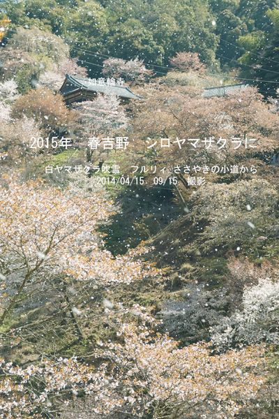 2015 New Year's card Yoshino-fleurie.jpg