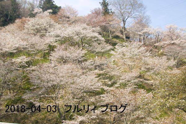 SDIM0171.jpg