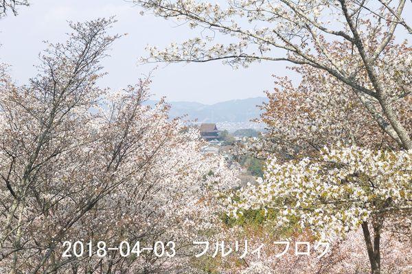 SDIM0185.jpg