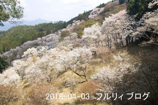 SDIM0194.jpg